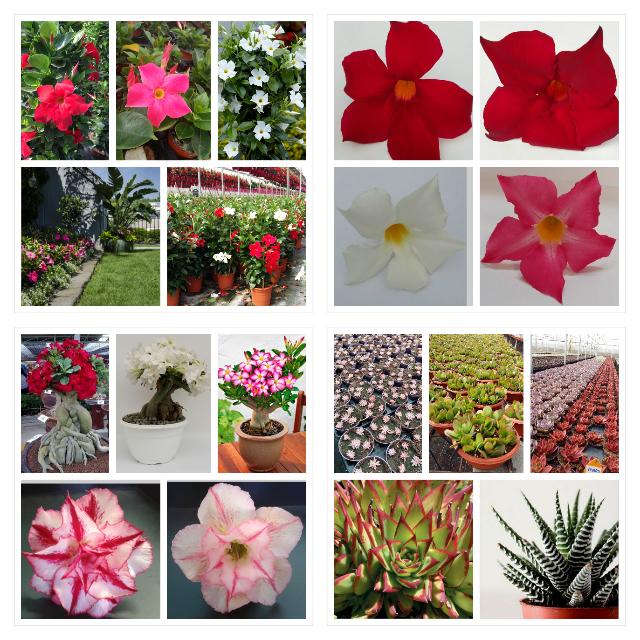 Plantal International
